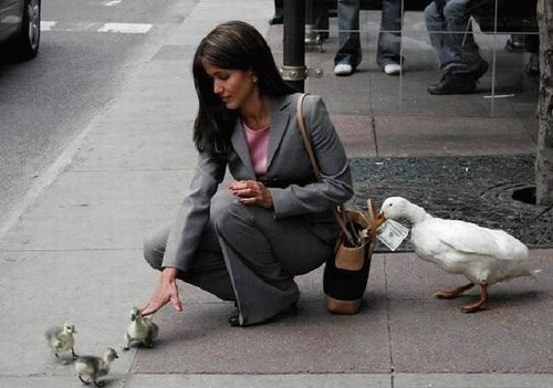 funny-pics-of-birds-are-assholes-stealing-duck