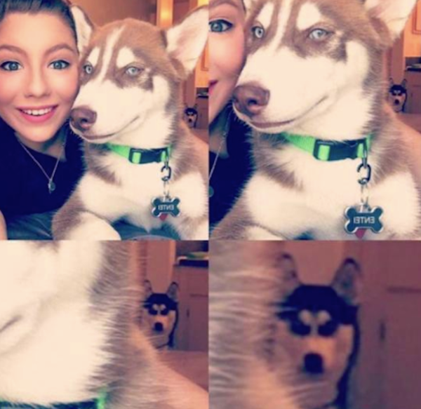 silly-photos-of-jealous-dog-in-background
