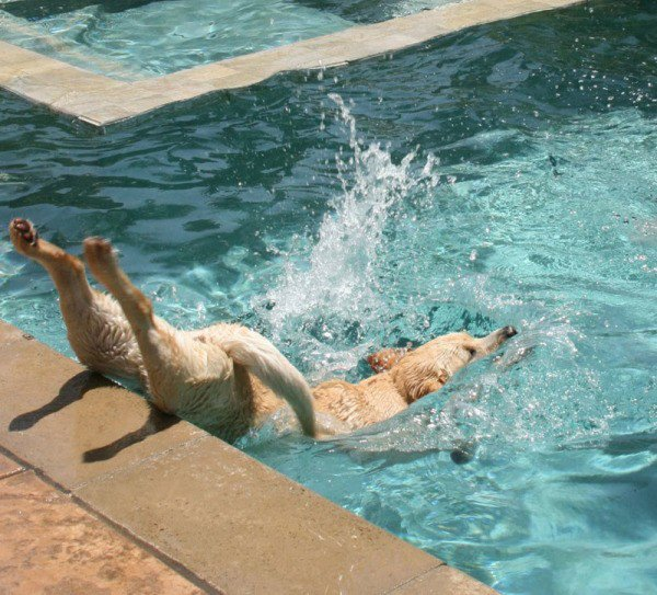 the-best-funny-pictures-of-dog-dive-fail